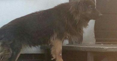 eko patrol 390x205 - Głodny i zaniedbany pies dzięki Eko patrolowi trafił do schroniska