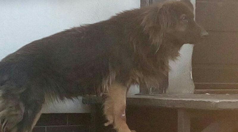 eko patrol 800x445 - Głodny i zaniedbany pies dzięki Eko patrolowi trafił do schroniska