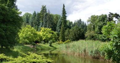 Arboretum w Kórniku - autor: Przemysław Jahr / Wikimedia Commons