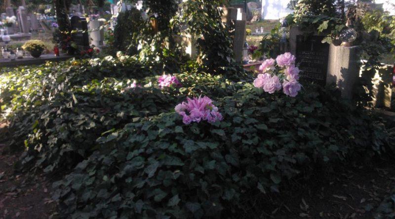 S  5D18 800x445 - Parkowy cmentarz przy Wiśniowej