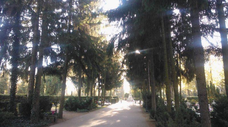 S  6D19 800x445 - Parkowy cmentarz przy Wiśniowej