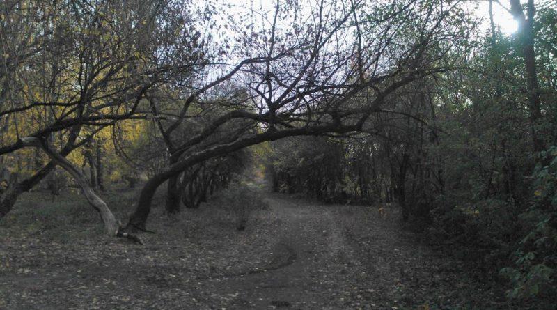 cmentarz Samotna