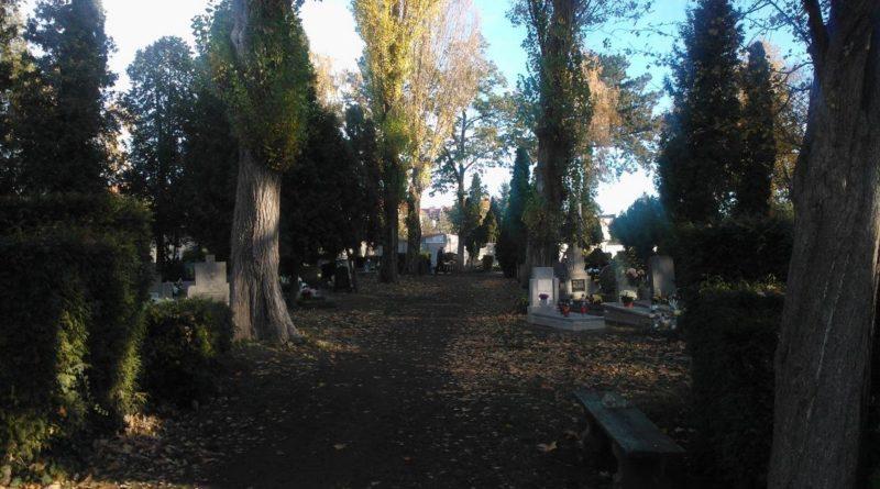 S  9D19 800x445 - Parkowy cmentarz przy Wiśniowej