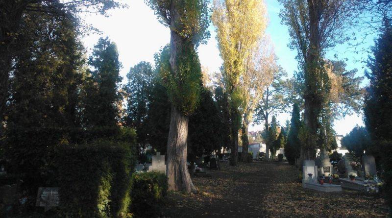 S  9D191 800x445 - Parkowy cmentarz przy Wiśniowej