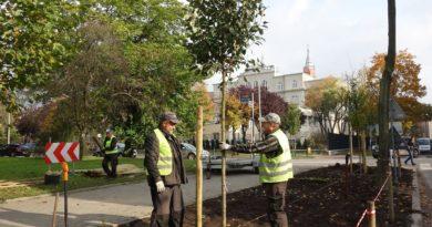 Sadzenie drzew