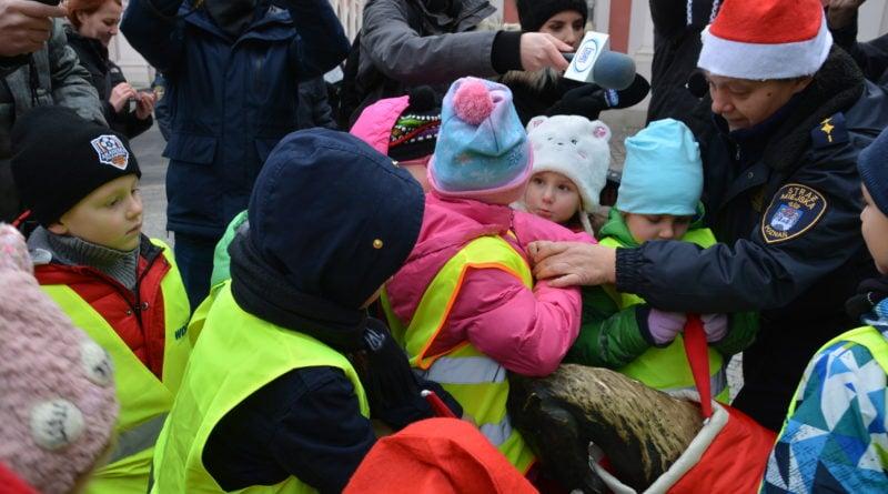 koziolki 12 800x445 - Poznański koziołki są już gotowe na zimę!
