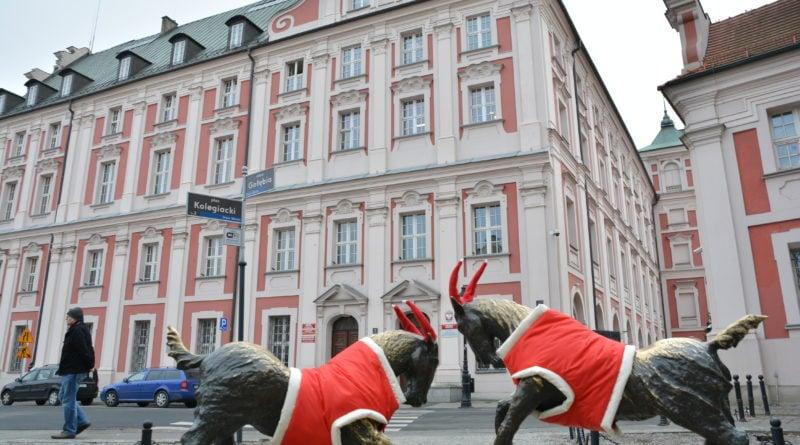 koziolki 4 800x445 - Poznański koziołki są już gotowe na zimę!