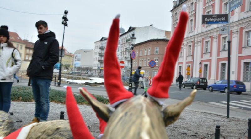 koziolki 5 800x445 - Poznański koziołki są już gotowe na zimę!