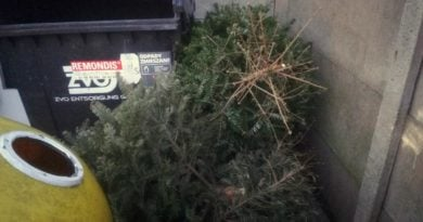 Bezpłatny odbiór drzewek świątecznych