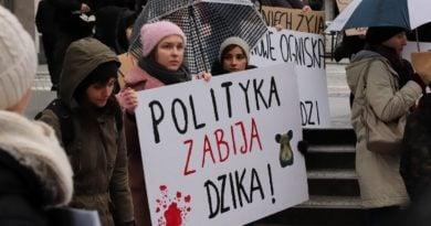 Poznań: Minister chce przywrócić polowania zbiorowe? Z powodu ASF