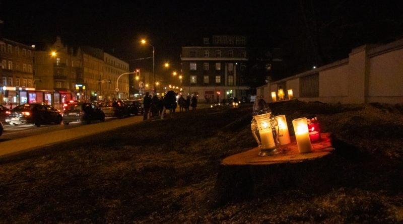 drzewa park wilsona 7 800x445 - Poznań: W miejscu wycinki drzew zapalili... znicze
