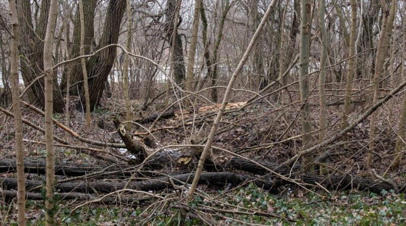 fort vii park 11 800x445 - Poznań: Petycja mieszkańców osiedla Lotników w obronie zieleni wokół Fortu VII