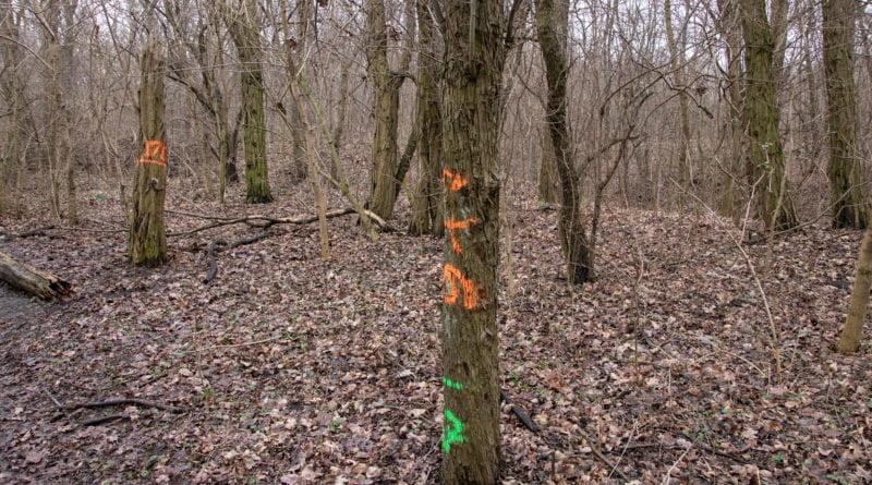 fort vii park 13 800x445 - Poznań: Petycja mieszkańców osiedla Lotników w obronie zieleni wokół Fortu VII