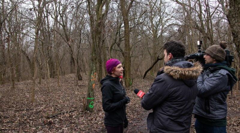 fort vii park 15 800x445 - Poznań: Petycja mieszkańców osiedla Lotników w obronie zieleni wokół Fortu VII