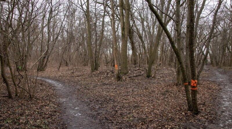 fort vii park 20 800x445 - Poznań: Petycja mieszkańców osiedla Lotników w obronie zieleni wokół Fortu VII