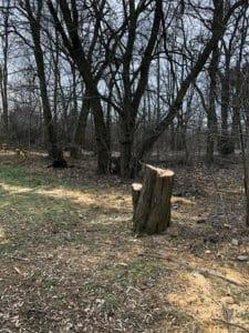 park fort vii 2 225x300 - Stop dla zmian w dzikim parku przy Forcie VII