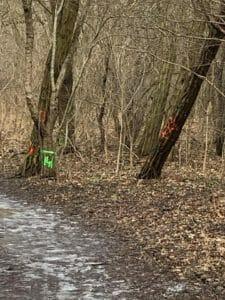 park fort vii 3 225x300 - Stop dla zmian w dzikim parku przy Forcie VII