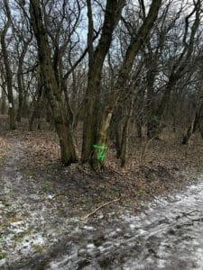 park fort vii 4 225x300 - Stop dla zmian w dzikim parku przy Forcie VII
