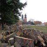 drzewa na Ostrowie Tumskim