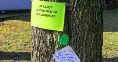 drzewa fot. slawek wachala 11 390x205 - Radna: Prezydent zapomina o istotnym fakcie – to my, mieszkańcy mamy być szczęśliwi i zdrowi
