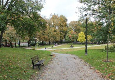 Ekspert: w miastach potrzebne są duże drzewa, a nie ich sadzonki