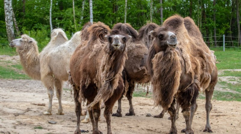 otwarcie lwiarni w nowym zoo 27.04 slawek wachala 14 800x445 - Otwarcie Azylu dla ocalonych zwierząt w Nowym Zoo