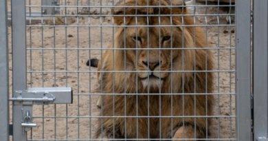 otwarcie lwiarni w nowym zoo 27.04 slawek wachala 18 390x205 - Otwarcie Azylu dla ocalonych zwierząt w Nowym Zoo