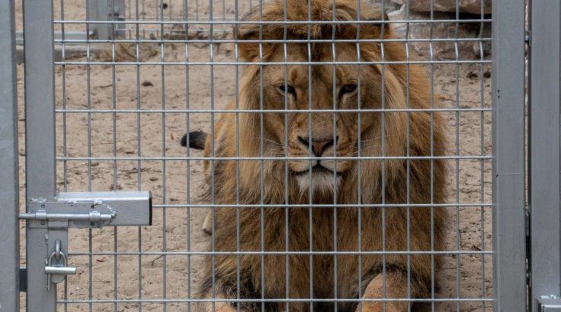 otwarcie lwiarni w nowym zoo 27.04 slawek wachala 18 800x445 - Otwarcie Azylu dla ocalonych zwierząt w Nowym Zoo