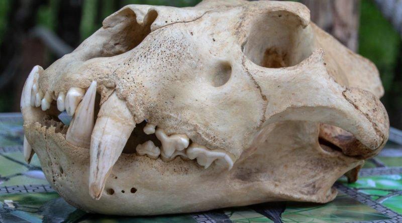 otwarcie lwiarni w nowym zoo 27.04 slawek wachala 21 800x445 - Otwarcie Azylu dla ocalonych zwierząt w Nowym Zoo