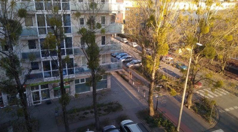 topole 800x445 - Poznań: Kolejna wycinka drzew - mieszkańcy protestują