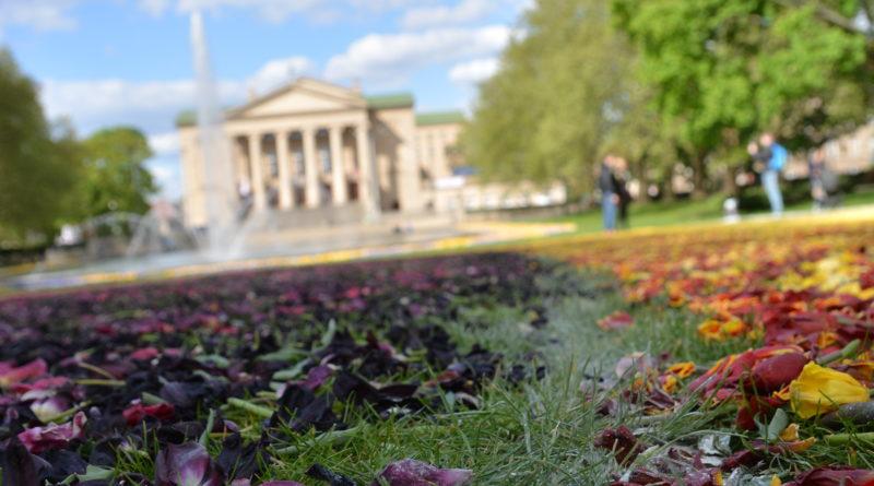 dywany kwiatowe fot. karolina adamska 10 e1557318051224 800x445 - Poznań: W mieście powstały dywany kwiatowe (zdjęcia)