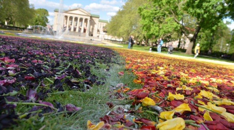 dywany kwiatowe fot. karolina adamska 11 800x445 - Poznań: W mieście powstały dywany kwiatowe (zdjęcia)