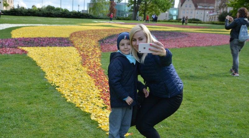 dywany kwiatowe fot. karolina adamska 2 800x445 - Poznań: W mieście powstały dywany kwiatowe (zdjęcia)