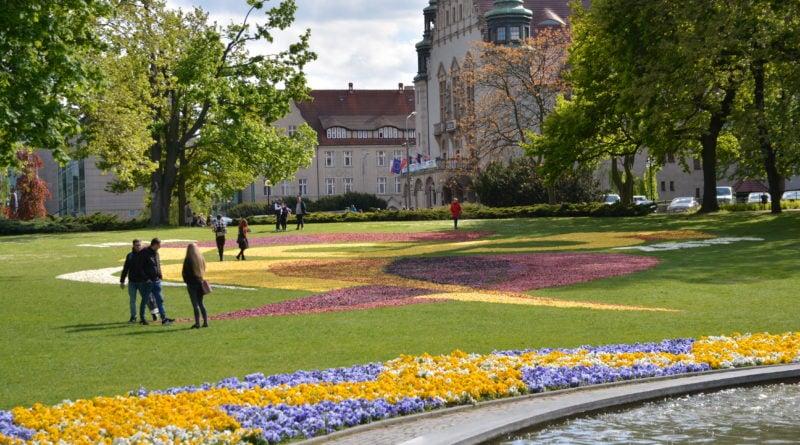 dywany kwiatowe fot. karolina adamska 4 800x445 - Poznań: W mieście powstały dywany kwiatowe (zdjęcia)