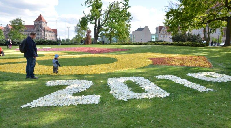 dywany kwiatowe fot. karolina adamska 7 800x445 - Poznań: W mieście powstały dywany kwiatowe (zdjęcia)