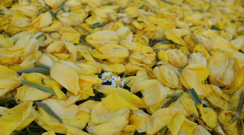 dywany kwiatowe fot. karolina adamska 8 800x445 - Poznań: W mieście powstały dywany kwiatowe (zdjęcia)