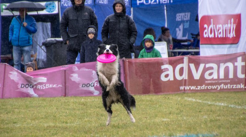 latajace psy slawek wachala 16 800x445 - Weekend latających psów w Poznaniu