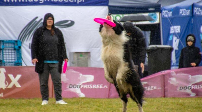 latajace psy slawek wachala 17 800x445 - Weekend latających psów w Poznaniu