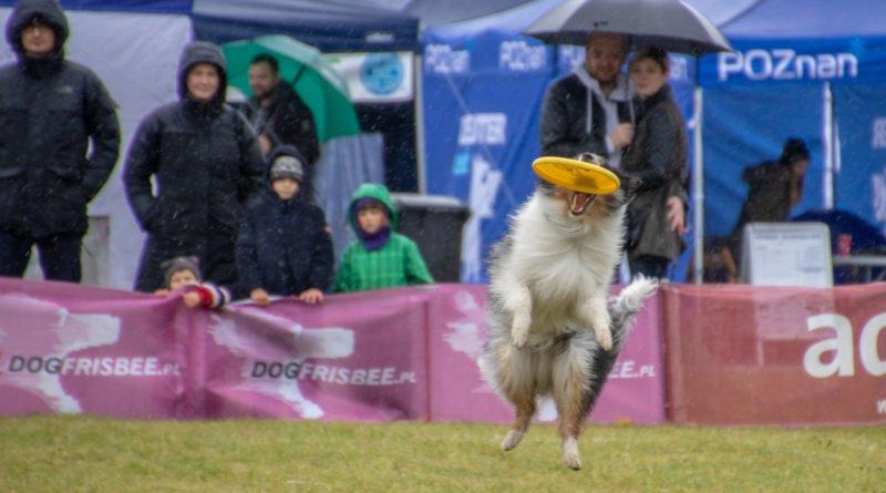 latajace psy slawek wachala 19 800x445 - Weekend latających psów w Poznaniu