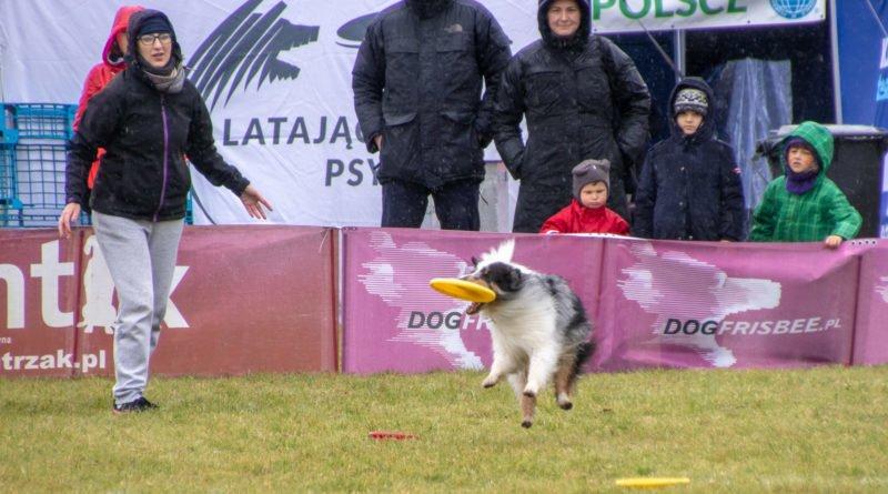 latajace psy slawek wachala 20 800x445 - Weekend latających psów w Poznaniu