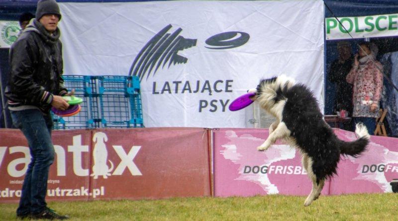 latajace psy slawek wachala 24 800x445 - Weekend latających psów w Poznaniu