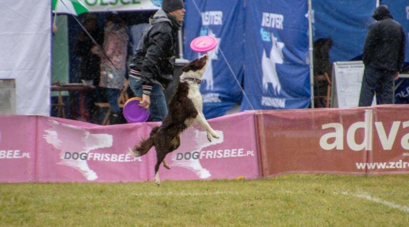 latajace psy slawek wachala 26 800x445 - Weekend latających psów w Poznaniu