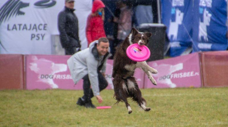 latajace psy slawek wachala 28 800x445 - Weekend latających psów w Poznaniu