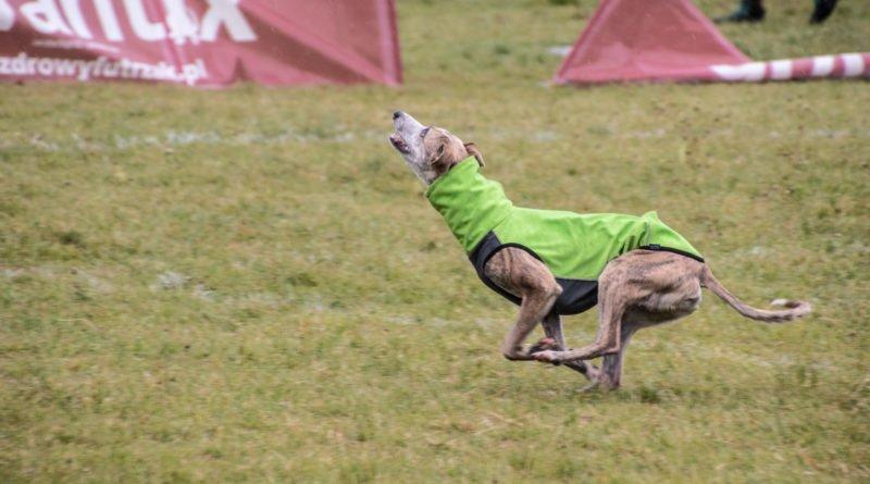 latajace psy slawek wachala 30 800x445 - Weekend latających psów w Poznaniu