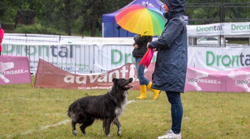 latajace psy slawek wachala 4 800x445 - Weekend latających psów w Poznaniu
