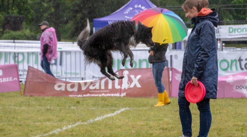 latajace psy slawek wachala 6 800x445 - Weekend latających psów w Poznaniu