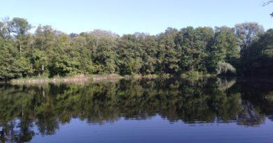 Śrem: Zamknięto kąpielisko na jeziorze Grzymisławskim