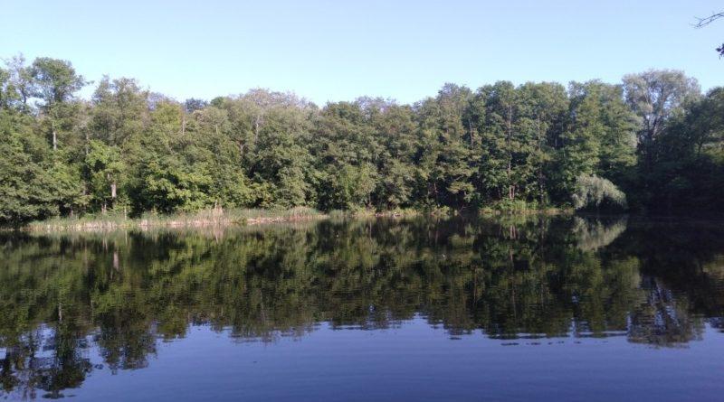 part 1561812097273 800x445 - Śrem: Zamknięto kąpielisko na jeziorze Grzymisławskim