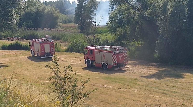 pozar zawady fot. pawel 11 800x445 - Krotoszyn: Spłonęła chlewnia w Chwaliszewie pod Krotoszynem