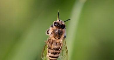 Turek: Tysiące martwych pszczół. Pszczelarze powiadomili policję